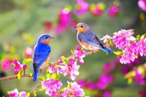 Vogel-Garten-anlocken-Futter-Frühling-Vogelhaus-bauen
